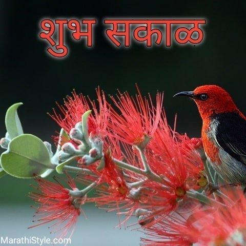 शुभ सकाळ ~ Shubh Sakal Whatsapp Image